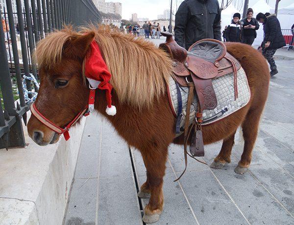 Animation poney animation cheval location chevaux animation chevaux, location poneys, location ânes , animation équestre , promenade en cheval , promenade équestre, Animation ferme , animation jument , animation ferme et animaux , animation animaux équestres, jeux equestre specacle équestre